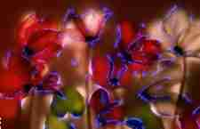 Τα ηλεκτρισμενα λουλουδια του Robert Buelteman