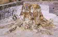Το Απολιθωμένο δάσος της Λέσβου
