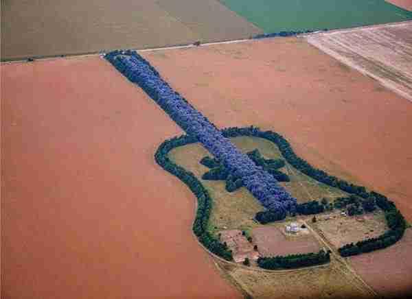 Ένα δάσος σε σχήμα κιθάρας