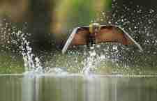 Οι νικήτριες φωτογραφίες του διαγωνισμού Veolia Environnement Wildlife
