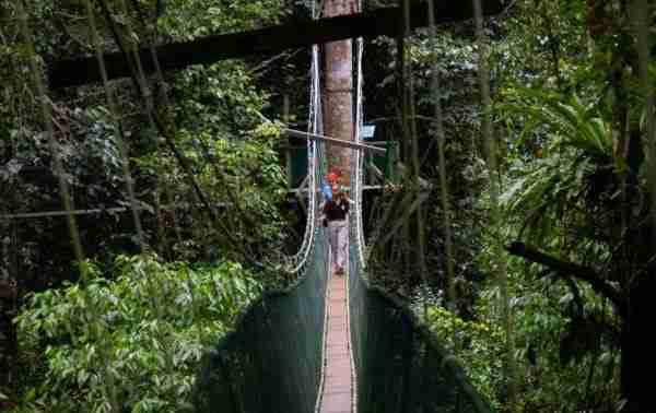 Skywalk Canopy, το μεγαλύτερο μονοπάτι πάνω στα δέντρα