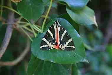 Η κοιλάδα με τις πεταλούδες στην Ρόδο