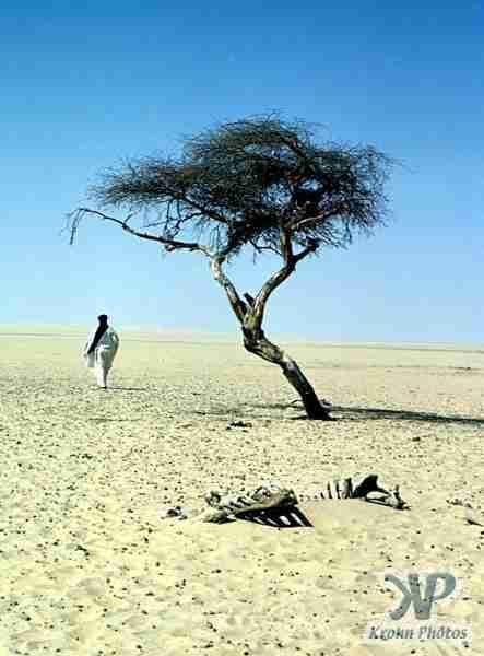 Το πιο μοναχικό δέντρο στη Γη
