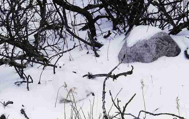 Μπορείτε να εντοπίσετε τα ζώα στις φωτογραφίες του Art Wolfe;