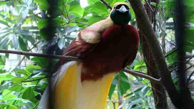 bali-birds-2