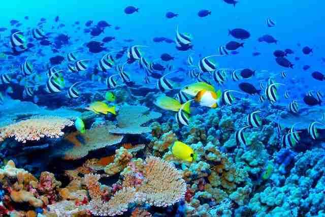 Ο μεγαλύτερος κοραλλιογενής ύφαλος στον κόσμο