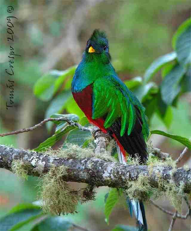 quetzal-i