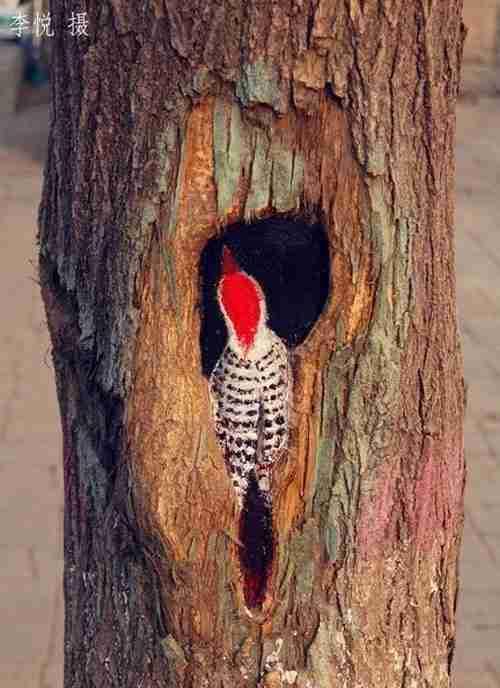 Ζωγράφος μετατρέπει τρύπες δέντρων σε έργα τέχνης