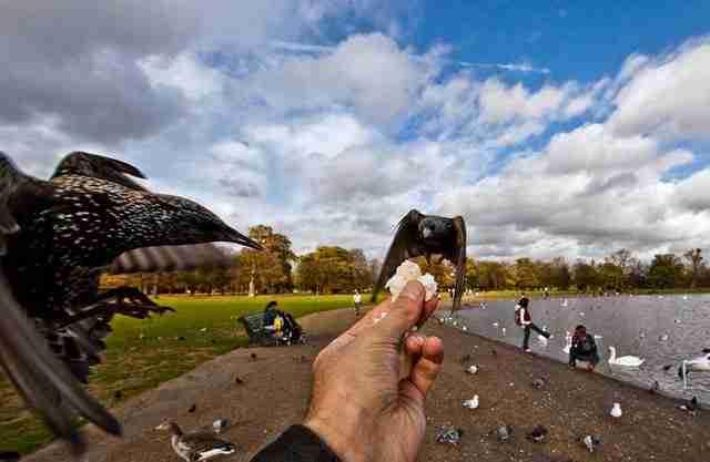 Πουλιά που τρώνε από το χέρι του φωτογράφου