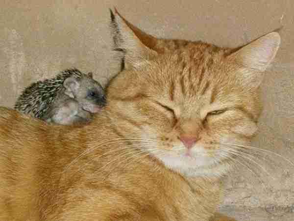 Ίσως η πιο παράξενη σχέση μεταξύ ζώων που έχετε δει!