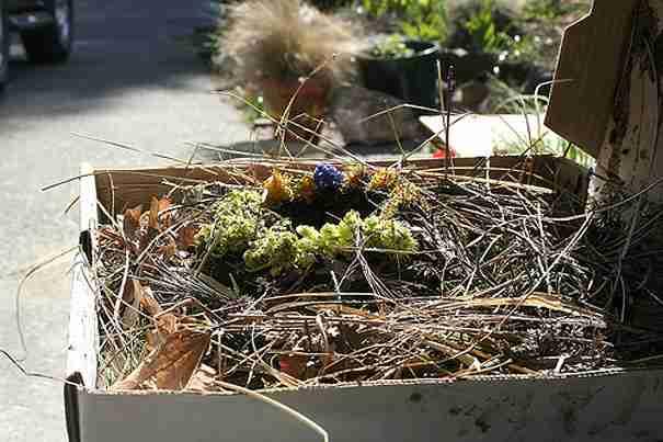 Bird's Nest 3