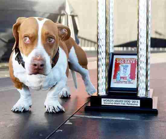 Ο ασχημότερος σκύλος του 2013