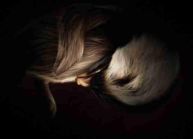 Φωτογραφίες ζώων στην κοιλιά της μαμάς τους