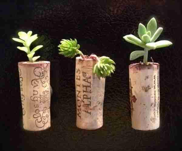 cork-garden