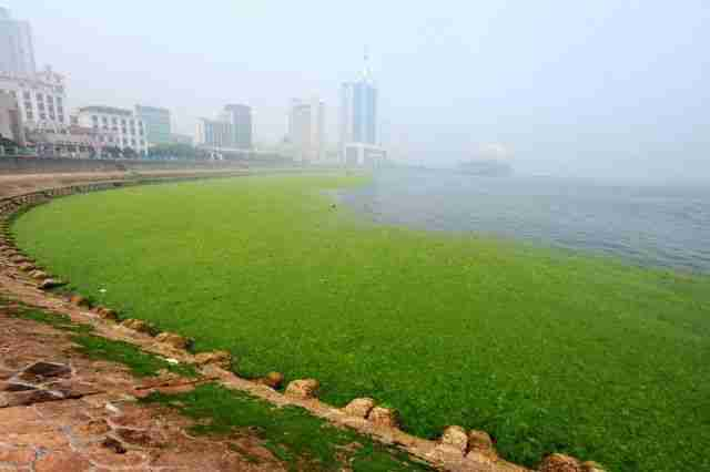 Το φαινόμενο της πράσινης παλίρροιας
