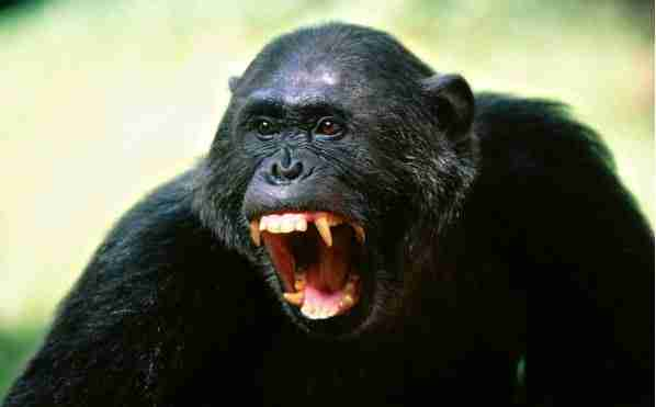 Τα 14 πιο επικίνδυνα ζώα στο κόσμο