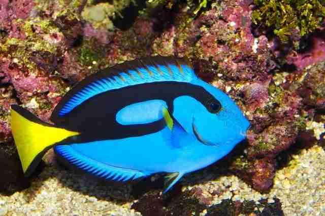 Τα πιο όμορφα ψάρια στον κόσμο