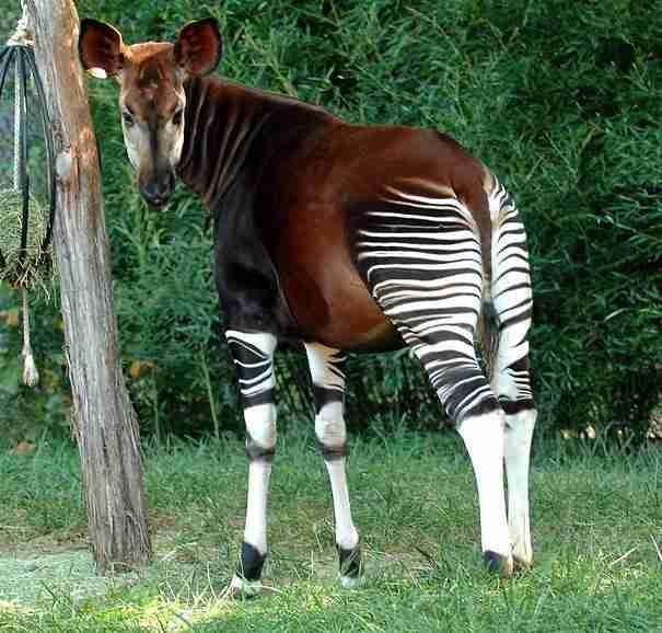 20 πολύ παράξενα ζώα