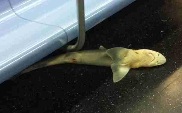 Τα 15 πιο παράξενα αντικείμενα που ξέχασαν επιβάτες σε τρένο