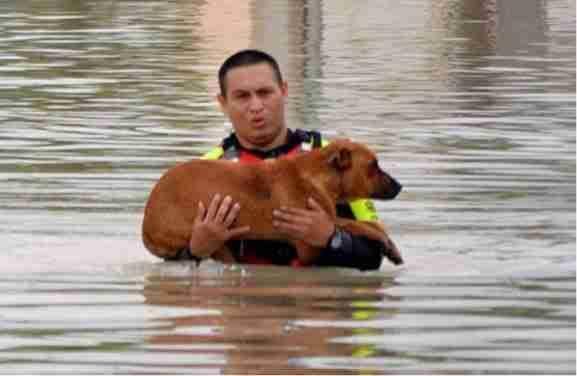 Άνθρωποι σώζουν ζώα - Δυο υπέροχα βίντεο