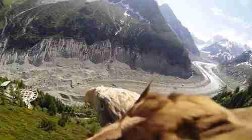 Μια κάμερα στην πλάτη ενός αετού δημιουργεί ένα υπέροχο βίντεο