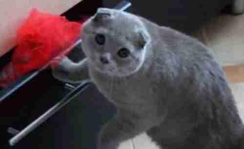 cat-caught-act