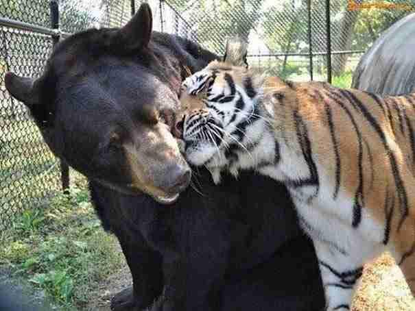 30 απίθανες φωτογραφίες με ερωτευμένα ζώα