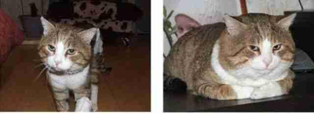 Γάτες πριν και μετά την υιοθεσία