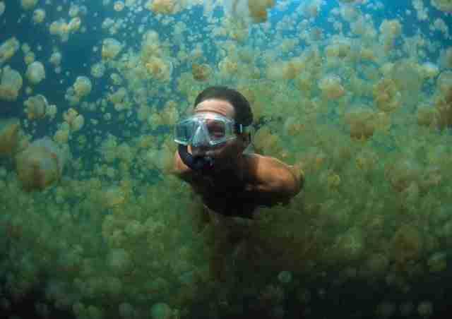 Άνδρας κολυμπά σε λίμνη με 13 εκατομμύρια μέδουσες