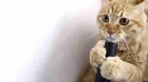 Γάτα εναντίον ηλεκτρικής σκούπας!
