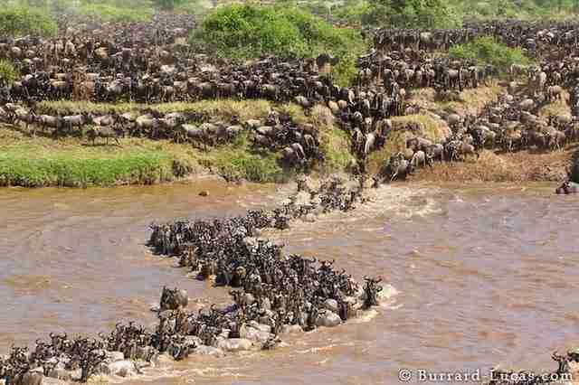 12 θεαματικές φωτογραφίες συγκεντρωμένων ζώων