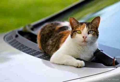 Η αντίδραση γάτας στους υαλοκαθαριστήρες