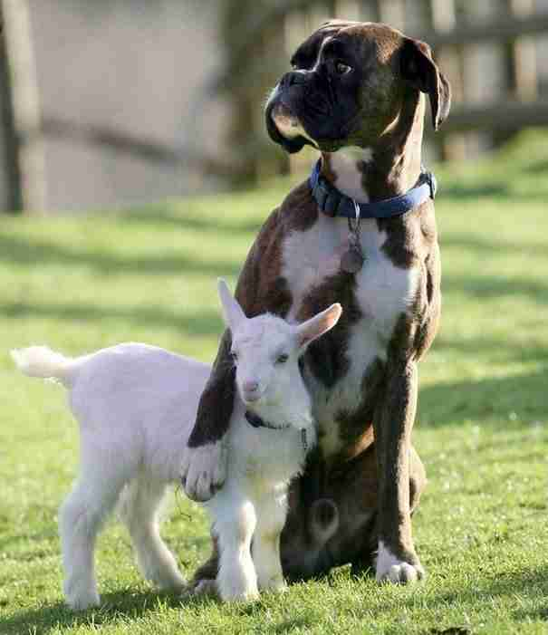 Οι 21 αταίριαστες φιλίες μεταξύ ζώων