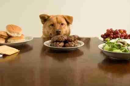 Βίντεο με ζώα που κλέβουν το φαγητό τους
