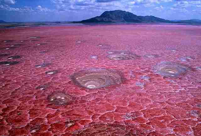 Η κόκκινη λίμνη που μετατρέπει τα θύματά της σε στήλες άλατος