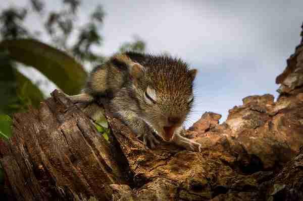 dinfo.gr - Σκίουρος και άνθρωπος γίνονται οι καλύτεροι φίλοι