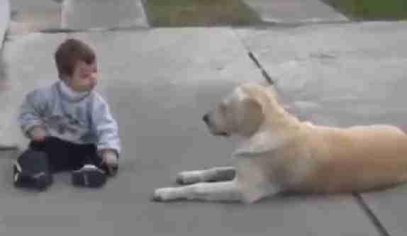 Λαμπραντόρ παίζει με παιδί με σύνδρομο Down