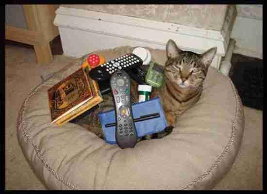 Όταν οι γάτες κλέβουν τα κρεβάτια των σκύλων