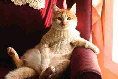 dinfo.gr - Γάτες που συμπεριφέρονται σαν.. άνθρωποι!
