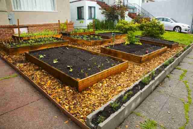 dinfo.gr - Αμερικανός πέταξε το γρασίδι, φύτεψε λαχανικά και τα μοιράζει στους γείτονες