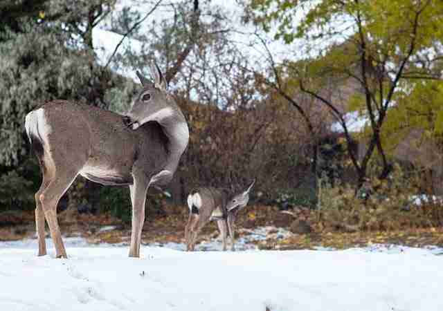 dinfo.gr - 33 μικρά ζώα φωτογραφίζονται παρέα με τις μαμάδες τους