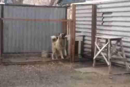 dinfo.gr - Ο σκύλος που λατρεύει την Ντίσκο μουσική