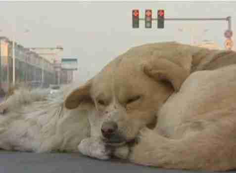 dinfo.gr - Γενναίος σκύλος αψηφά το κρύο για να μείνει δίπλα στον νεκρό του φίλο!