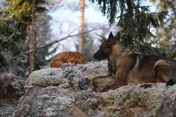 dinfo.gr - 15 ασυνήθιστες φιλίες ζώων που θα ζεστάνουν τη καρδιά σας!