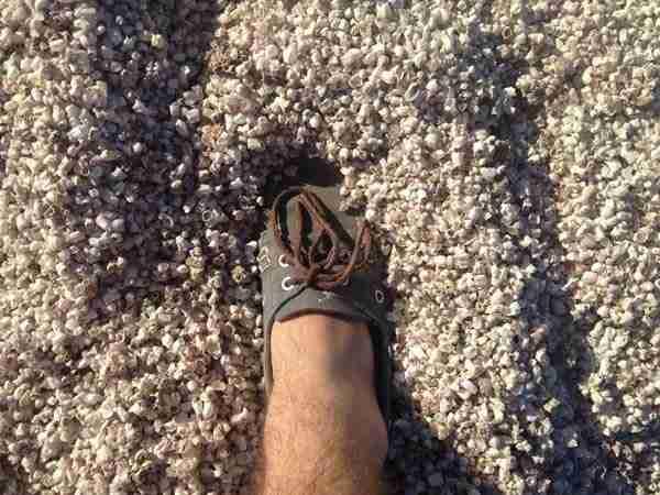 dinfo.gr - Αυτή η παραλία μοιάζει πανέμορφη.. μέχρι να συνειδητοποιήσετε ότι δεν είναι από άμμο!