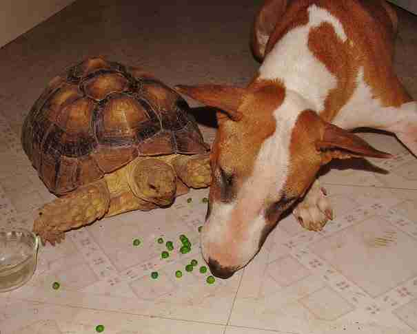 dinfo.gr - Καταφύγιο γίνεται το σπίτι 60 ζώων που περνούν την ώρα τους κάνοντας παρέα όλα μαζί!