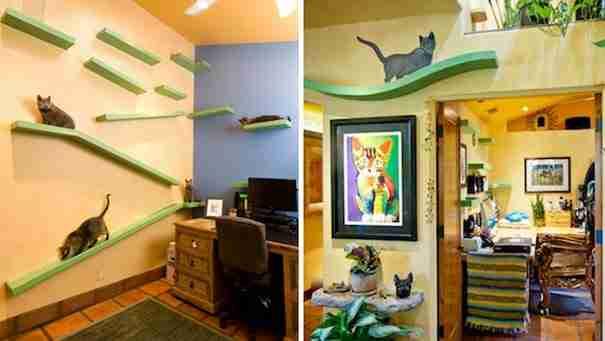 dinfo.gr - Ο άντρας που μετάτρεψε το σπίτι του σε παιδική χαρά για τις γάτες του