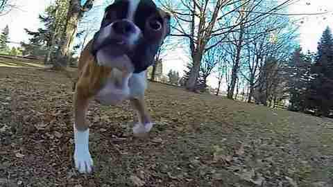 dinfo.gr - Ένα σκυλί με δυο πόδια βλέπει για πρώτη του φορά παραλία!