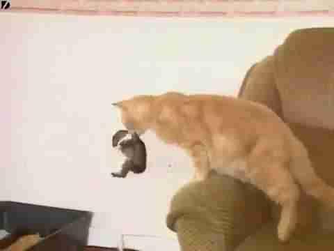 dinfo.gr - Όσοι νομίζουν ότι οι γάτες δεν μπορούν να αγαπήσουν, ας δουν αυτό το βίντεο!