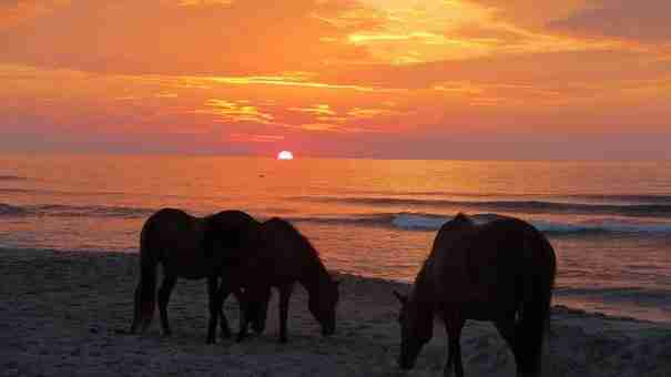 dinfo.gr - Assateague, ένα νησί γεμάτο όμορφα άλογα Πόνυ